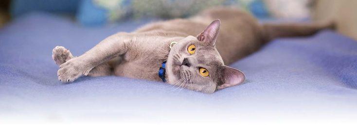 Feline Gastrointestinal Disorders & Stomach Sensitivity - Cat Diseases   Hill's Pet