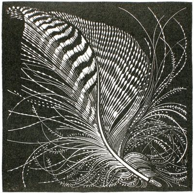 Colin See-Paynton. Teal Feather. (wood engraving) http://polarbearstale.blogspot.com/2010/03/beautiful-feathers-by-colin-see-paynton.html