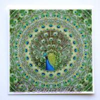 Meditatiekaart Peacock 9 x 9 cm - www.droomcreaties.nl