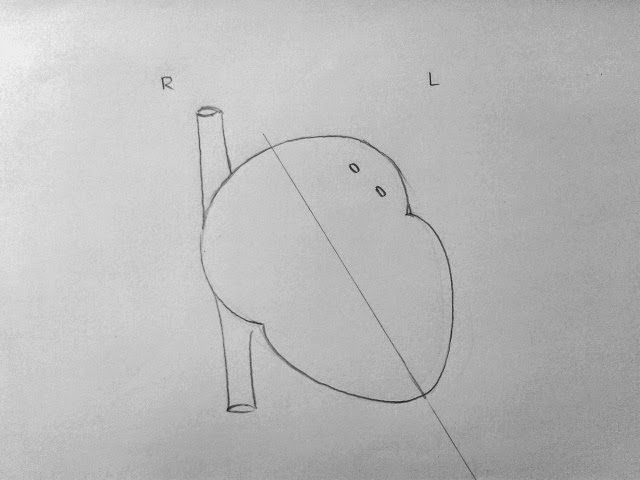How to draw internal structure of Human heart - Easy ...