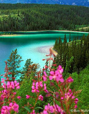 Emerald Lake, near Carcross, Yukon--One of the most beautiful places I have seen--our guide told us that the natives believed that the Aurora Borealis lived in the lake in the summer