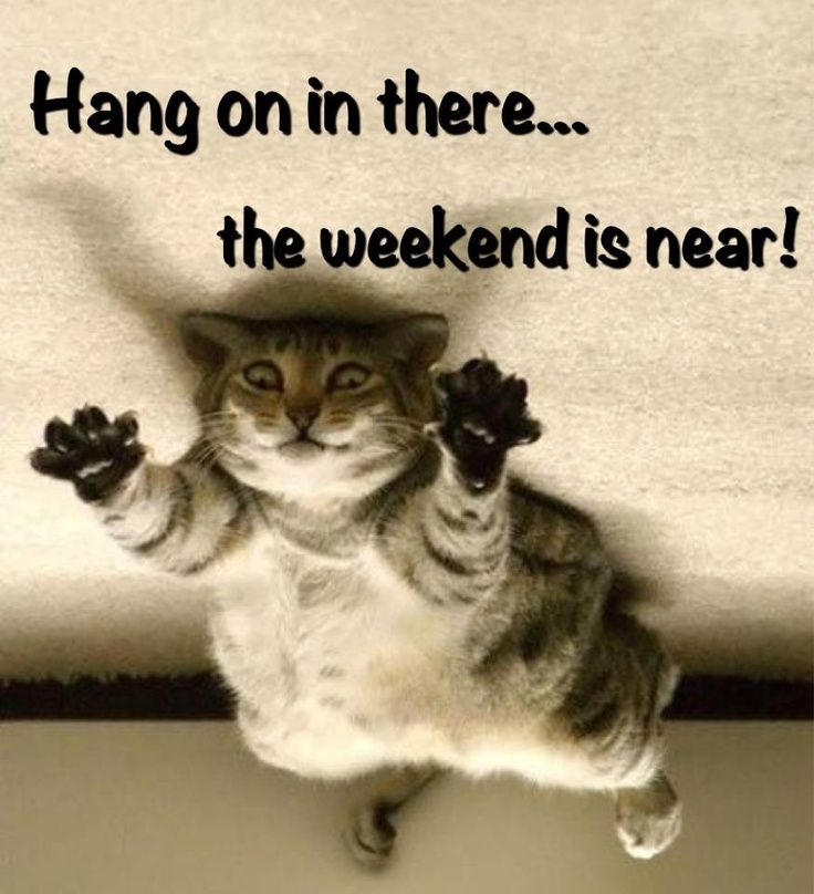 the weekend is near quotes quote weekend friday happy friday days of the week friday quotes weekend quotes