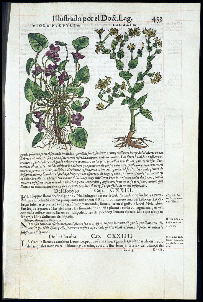 «De materia medica», de Dioscórides — Visor — Biblioteca Digital Mundial