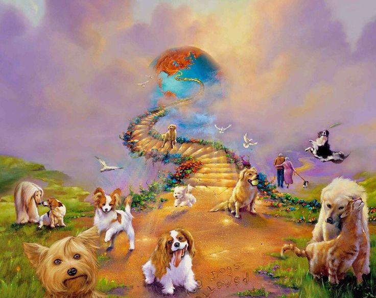 радуга собак картинки изображением