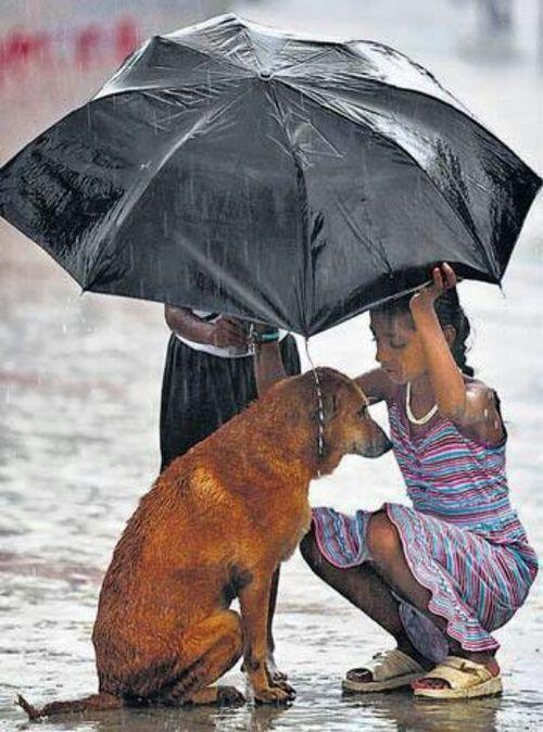 A girl uses her umbrella to protect a stray dog during monsoon rains in Mumbai, India, June 12, 2013. (AP Photo/ Rafiq Maqbool)