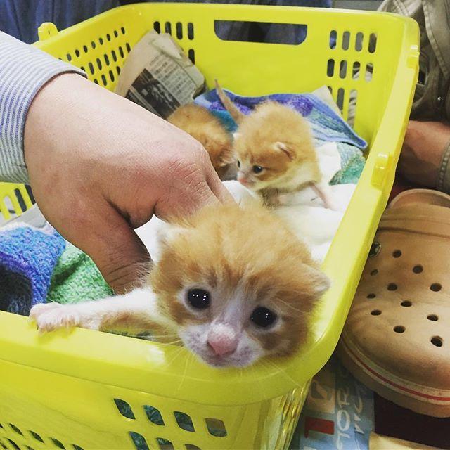 恋に落ちました #ねこ #ネコ #猫 #ぬこ #子猫 #子ねこ #子ネコ #子ぬこ #愛猫 #310 #310motorgarage #福岡 #北九州 #クロックス #crocs