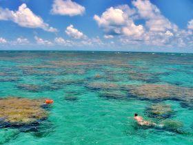 Você realmente sabia?: Praia de Maracajaú - Rio Grande do Norte - Brasil