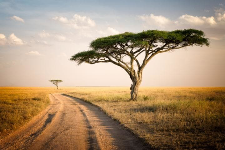 1000 Ideas About Madagascar Country On Pinterest