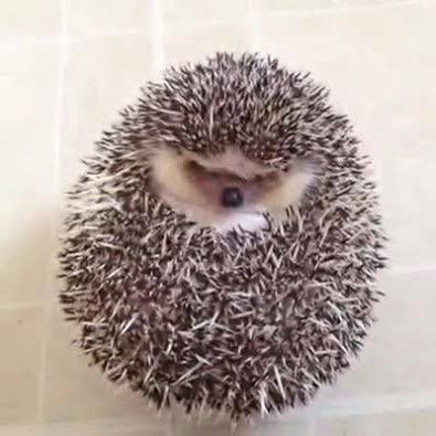 The cutest Hedgehog you've seen all day.