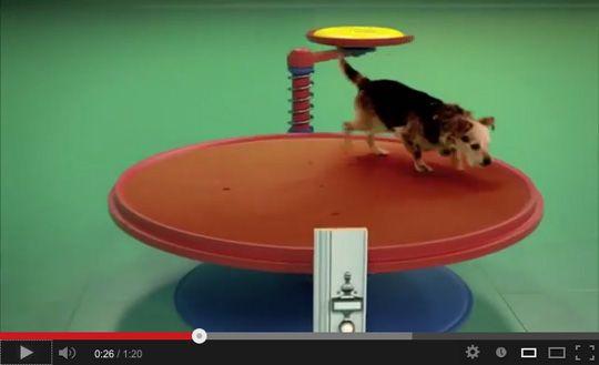 Planning ROCKETSブログ » 超可愛い! 遊んでる犬が作動させるルーブ・ゴールドバーグ・マシン