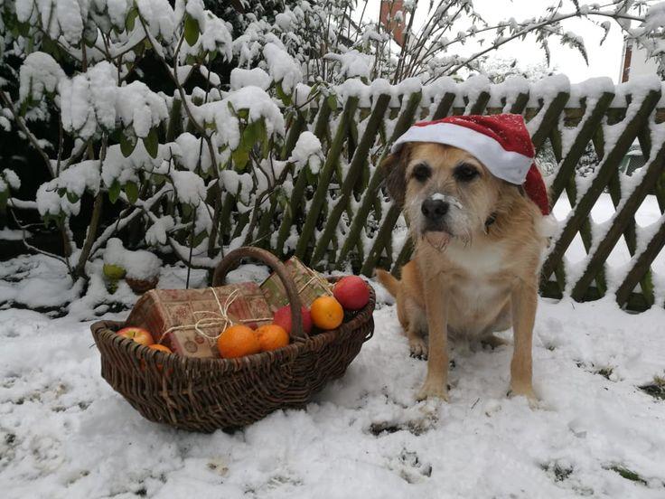 Hunde Foto: Marion und Jerry - Unser kleiner Weihnachtsmann Hier Dein Bild hochladen: http://ichliebehunde.com/hund-des-tages  #hund #hunde #hundebild #hundebilder #dog #dogs #dogfun  #dogpic #dogpictures
