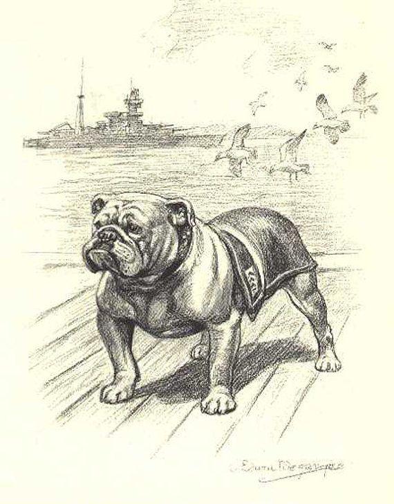Bulldog Sketch decoupaged on wood. A must for any English Bulldog