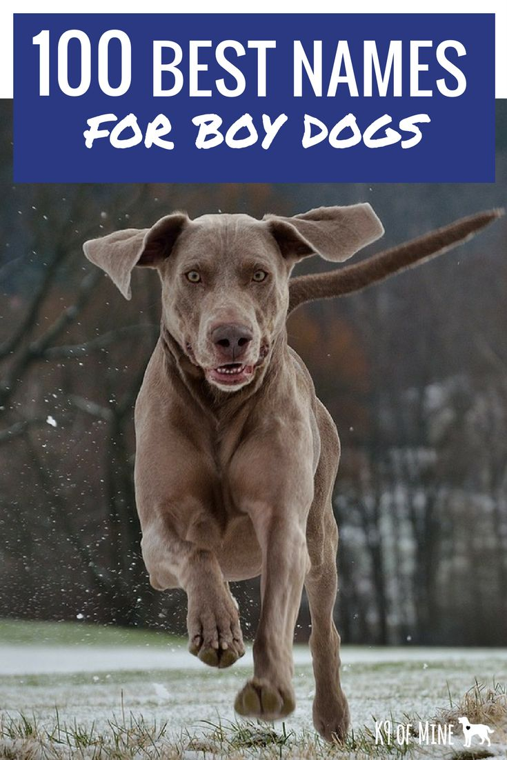 100 Best Male Dog Names The Most Popular Names for Boy