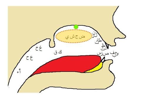 Makharij-Shajariyah-Haafiyah