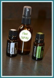 Flea repellent for Dogs Mix 4-6 drops of Purify oil with 4-6 drops of Rosemary in a 16 oz spray bottle and fill with distilled water, Spray lightly on you dog, avoiding eyes. Reapply as needed for added protection.  www.oildivamartim.com