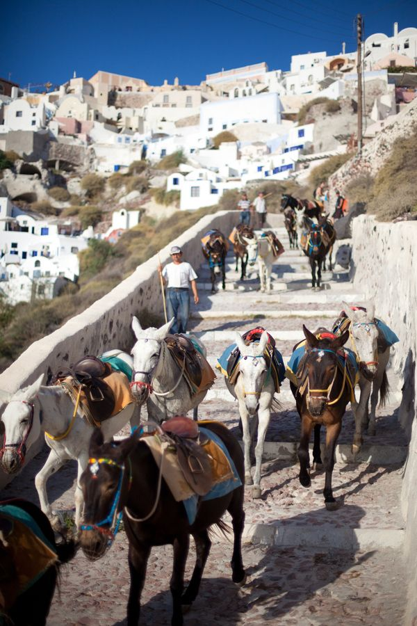 Donkeys walking down steps to Amoudi bay, Santorini, Greece selected by www.oiamansion.com