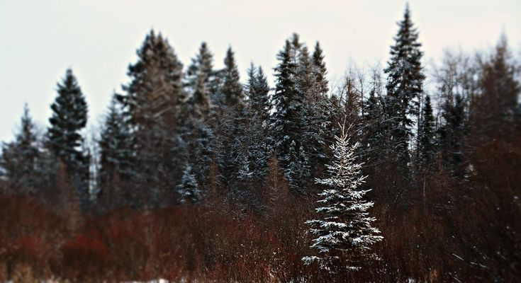 Winter beauty, boreal forest; https://urbanehillbillycanada.blogspot.ca/2018/02/bush-life-firewood-cutting.html