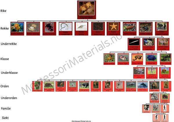 MontessoriMaterials.no — Dyreriket plansjer