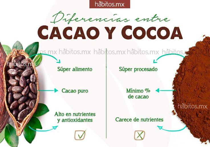 Hábitos Health Coaching |   Diferencias entre CACAO Y COCOA