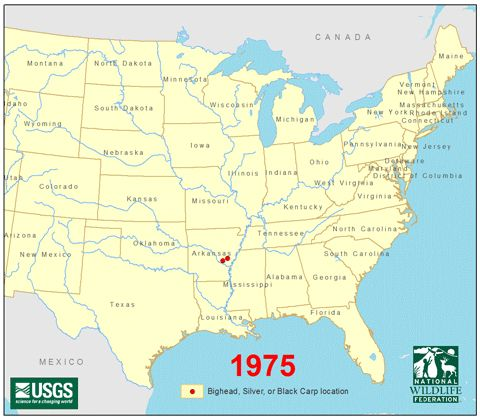 Asian Carp Threat to the Great Lakes - National Wildlife Federation