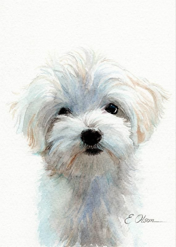 Original Watercolor Maltese Painting Maltese Puppy Painting Dog