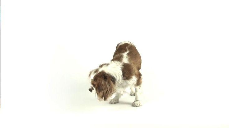 Variedades: Cachorro sensacional!!!!