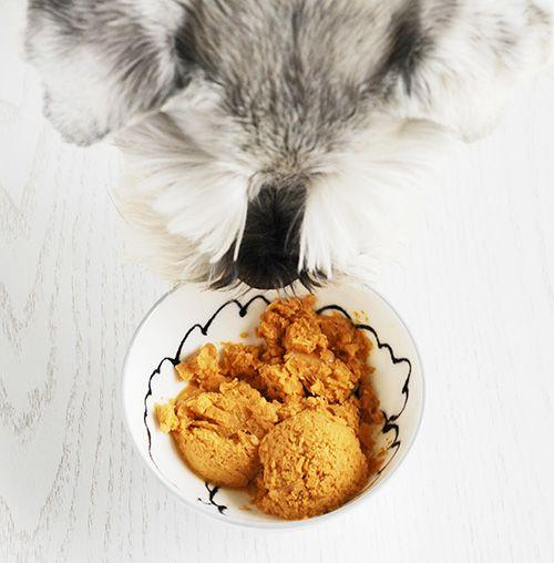 Dog I Y: Easy Three Ingredient Homemade Dog Ice Cream - Peanut Butter Pumpkin Dog Ice Cream