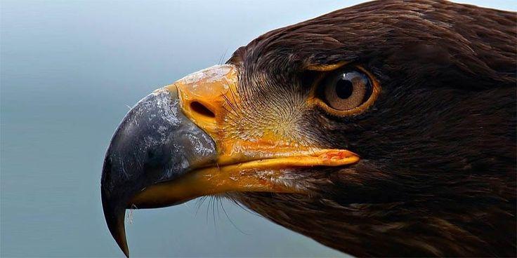 Największe ptaki drapieżne – TOP 10