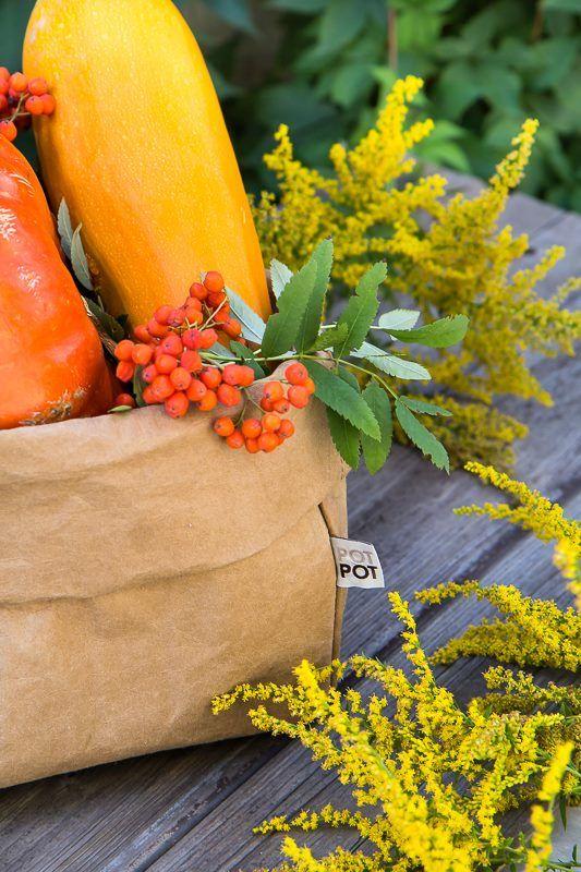 jesień i dynie