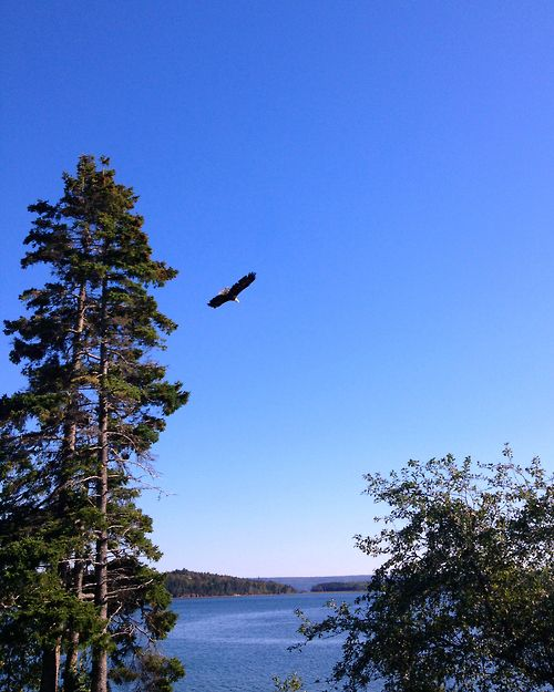 An eagle takes flight from the Osprey Shores Golf Resort over the Guysborough harbour. One of our top 10 fall travel experiences on the Nova Scotia Authentic Seacoast. http://www.authenticseacoast.com/play/autumn.html
