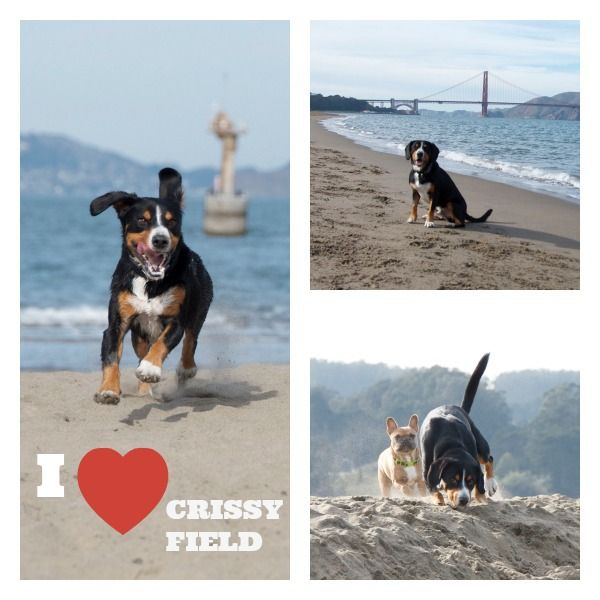 Alfie S Guide To Crissy Field Off Leash Fun On The Beach San