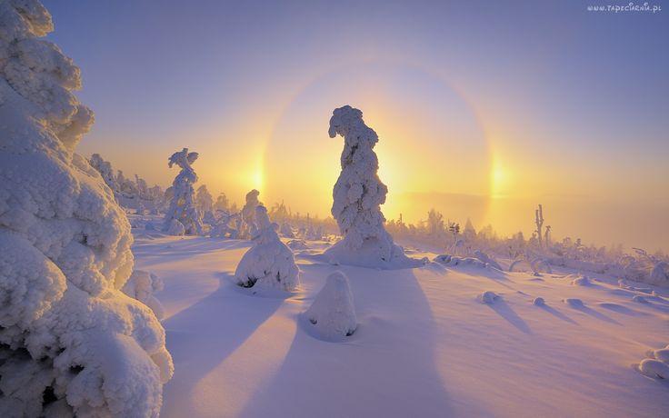 Drzewa, Pokryte, Śniegiem, Słońce