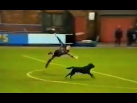 Funny Football Moments, Football Comedy ► Player and Animals on the Pitch - YouTube