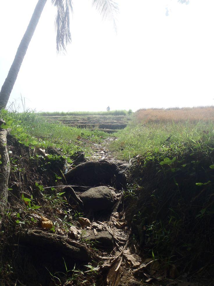 Bali Rice Padi Tracking