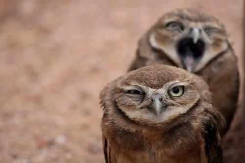 owls=)