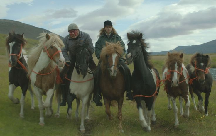 Of Horses and Men picks up the Nordic Council Film Prize - Cineuropa