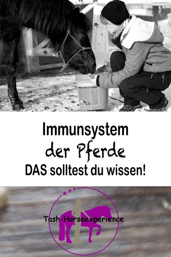 Was du über das Immunsystem des Pferdes wissen solltest!