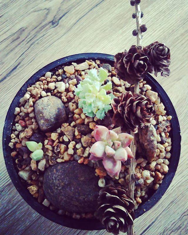 Suculent bonsai