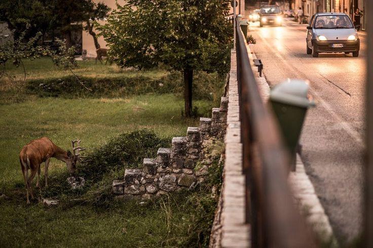 """""""Convivenza"""", Villetta Barrea (AQ), via Roma.riScatto urbano di Andrea Boccini. Foto inviata via mail, in lizza esclusivamente per il premio giuria."""