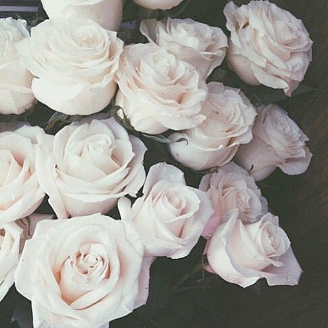 #pink##roses#lovely