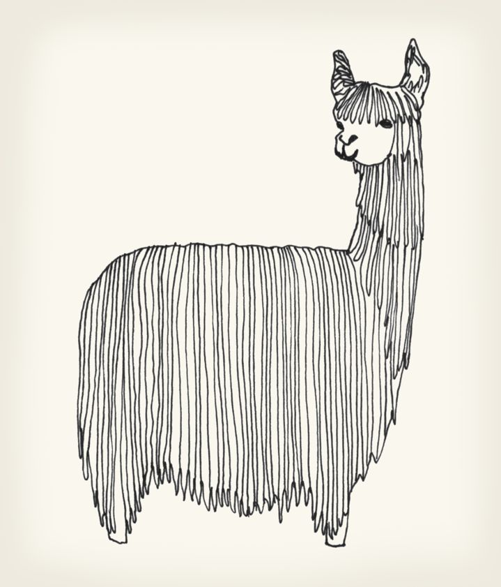 'Alpaca' by Giulia Benaglia