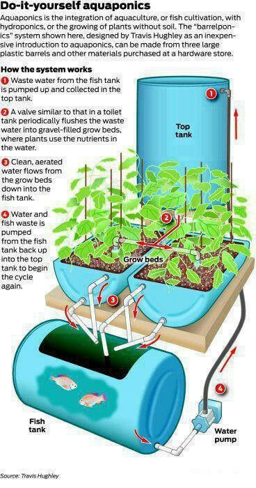 Aquaponics. Is there a simpler version of this? Maybe just...scoop the water? Am I missing the necessity of the pump? I like the over all idea. I hate the look. Is it too much to ask for a pretty sustainable garden?