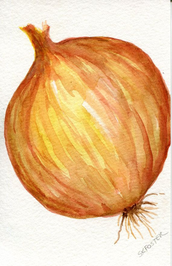 Yellow Onion Watercolors Paintings original by SharonFosterArt