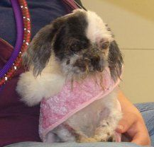 Photo courtesy of SPCA Another miracle dog saved from moronic owners in Buffalo New York
