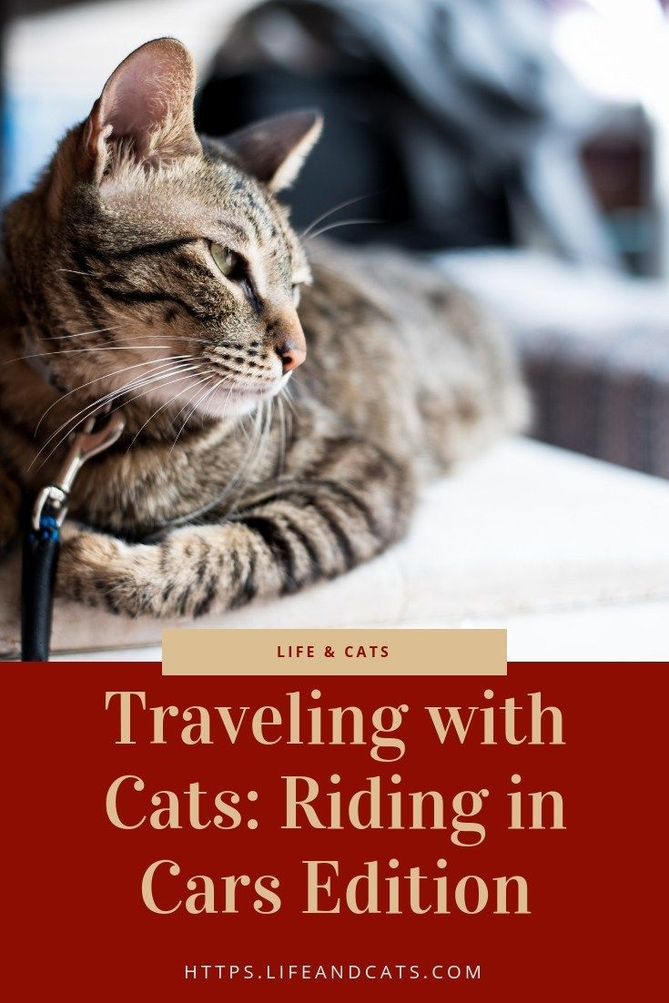 The Ultimate Guide To Traveling With Cats The Riding Around In Cars Edition Cat Travel Cat Friendly Hotels Adventure Cat