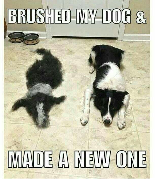 Brushed my dog