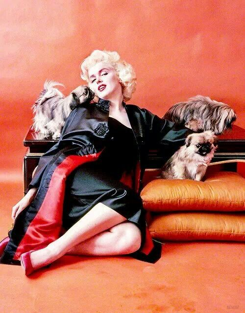Marilyn Monroe and Her Pekingese. And the baby on the pillow looks like my BELLA