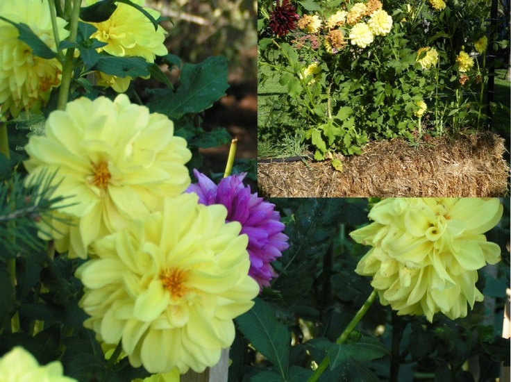 Use A Bale Or Two In Your Straw Bale Garden To Grow Summer 640 x 480