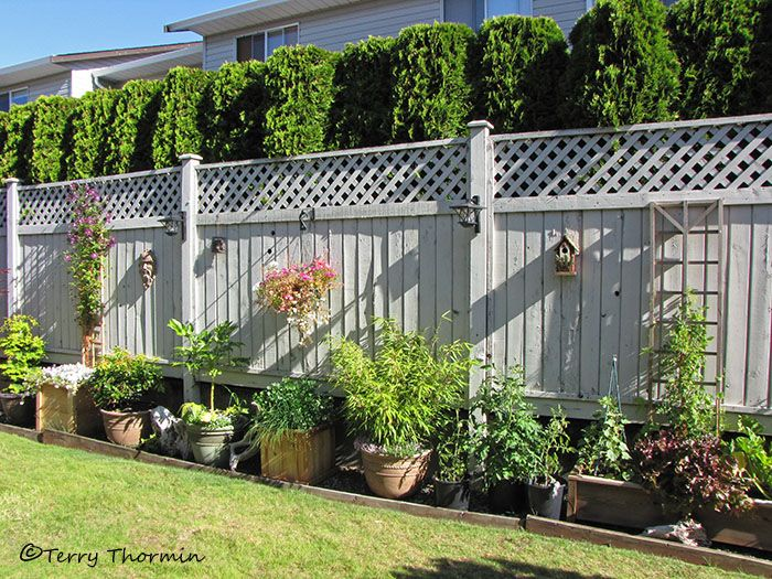 Small Garden Fence Ideas outdoor room outdoor oasis Find This Pin And More On Backyard Ideas Backyard Fences