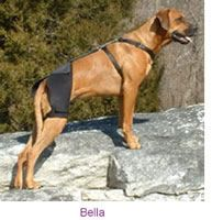 The Mobility Brace provides support and compression to the joints and muscles in the hips and lower back. Appropriate for active dogs of all ages who suffer from arthritis, mild to moderate hip dysplasia, decreased endurance during activity, hip pain, low back pain or weakness and back leg limping.